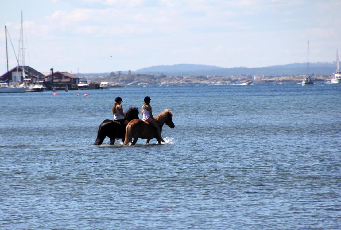 Badende hester er et vanlig syn på Jomfruland.