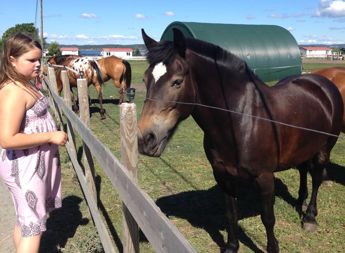 På besøksgården ved Åsvik kommer du lett i kontakt med hestene.