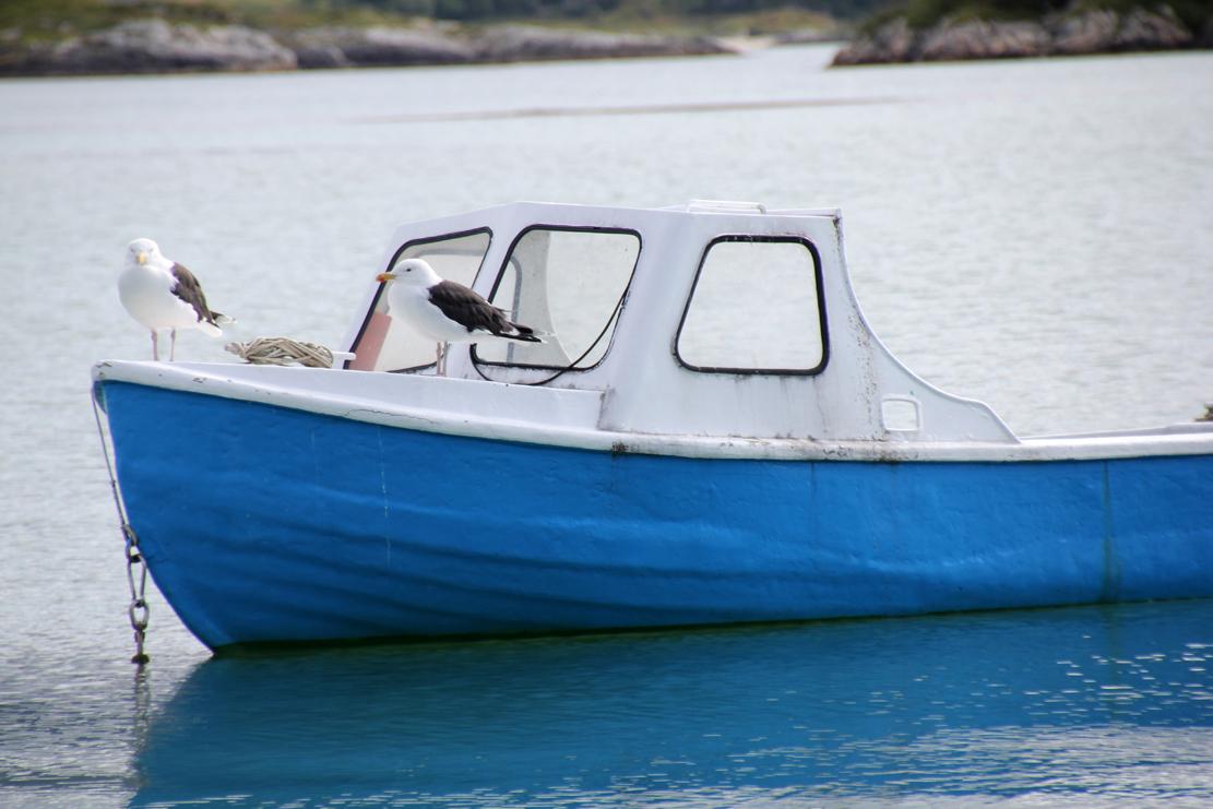 Lokale fjærkledde innbyggere tar en pause på en av båtene.