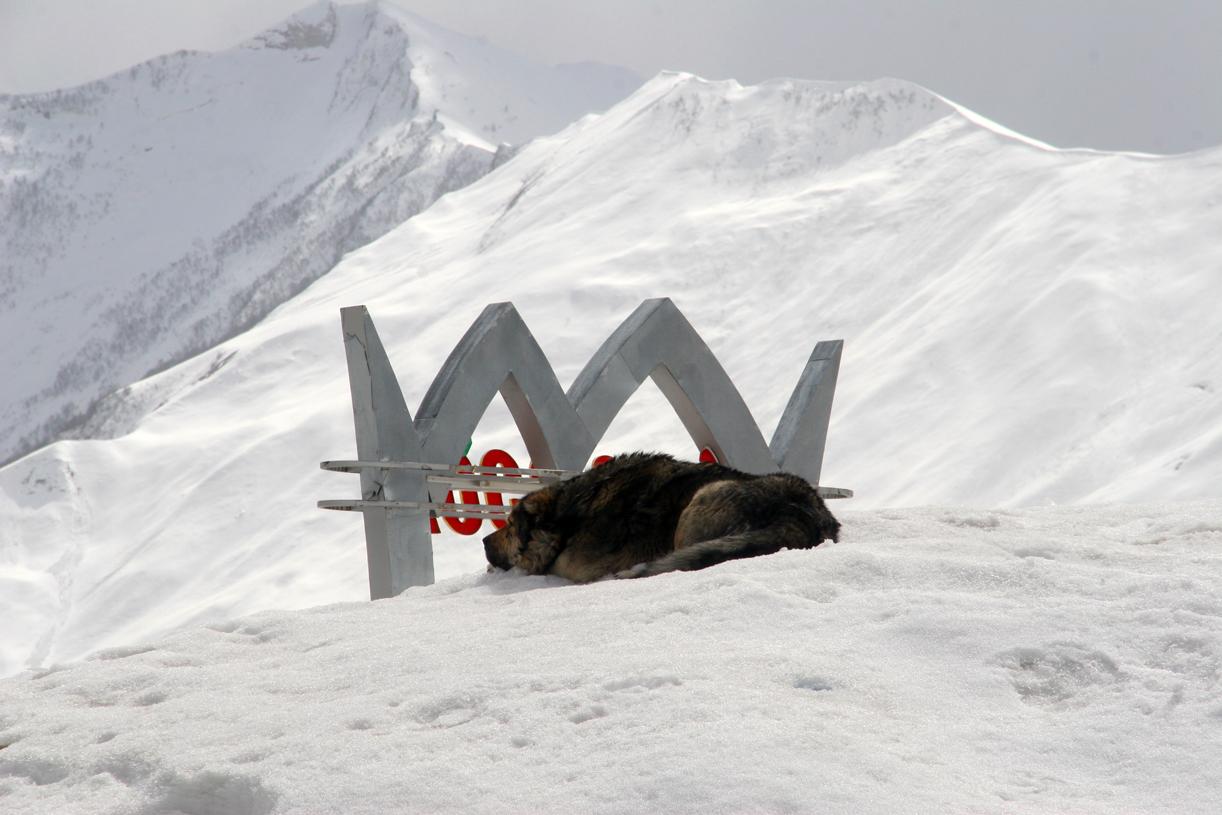 KONGEN PÅ HAUGEN: En lodden kaukasushund nyter roen og synet av sitt snødekte rike.