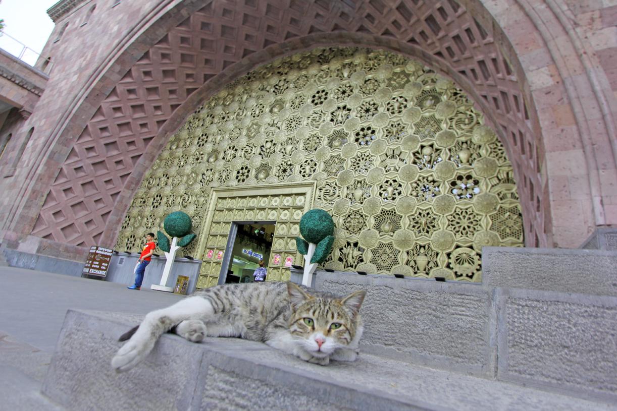 Cool cat i  Jerevan.