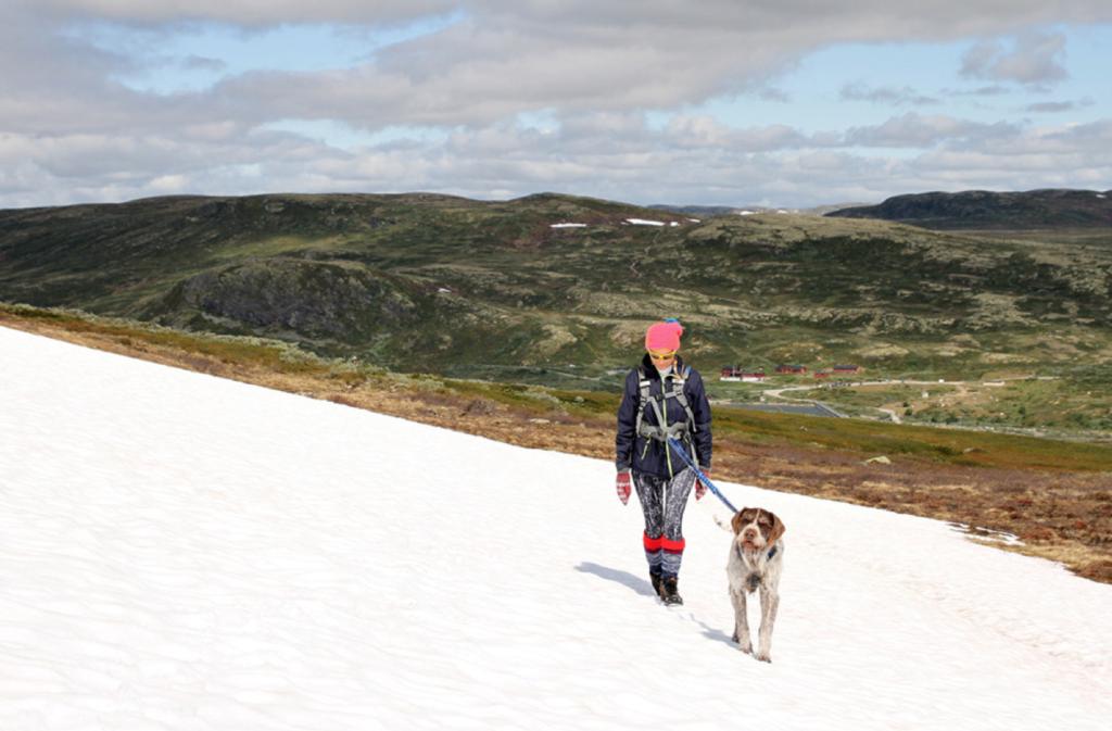 Å reise på fjellet uten hunden føles litt feil, da det er har han trives best. Heldigvis har DNT flere hytter med hunderom.