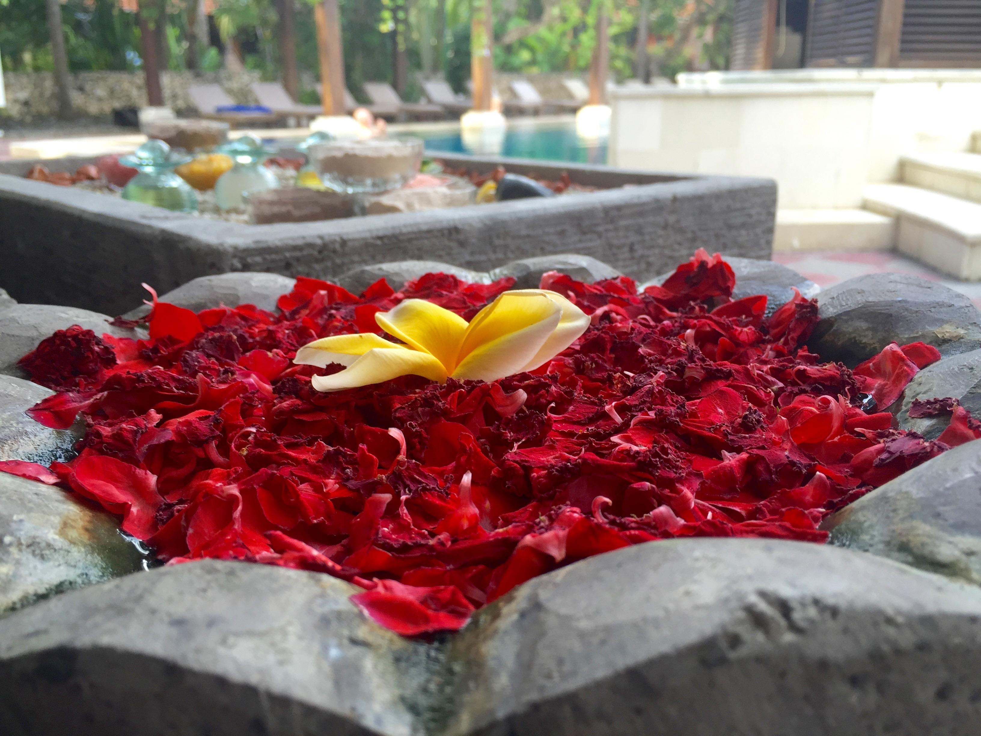 Friske blomster med deilige dufter. Den hvite og gule frangipaniblomsten som ligger oppå de røde bladene er min favoritt.