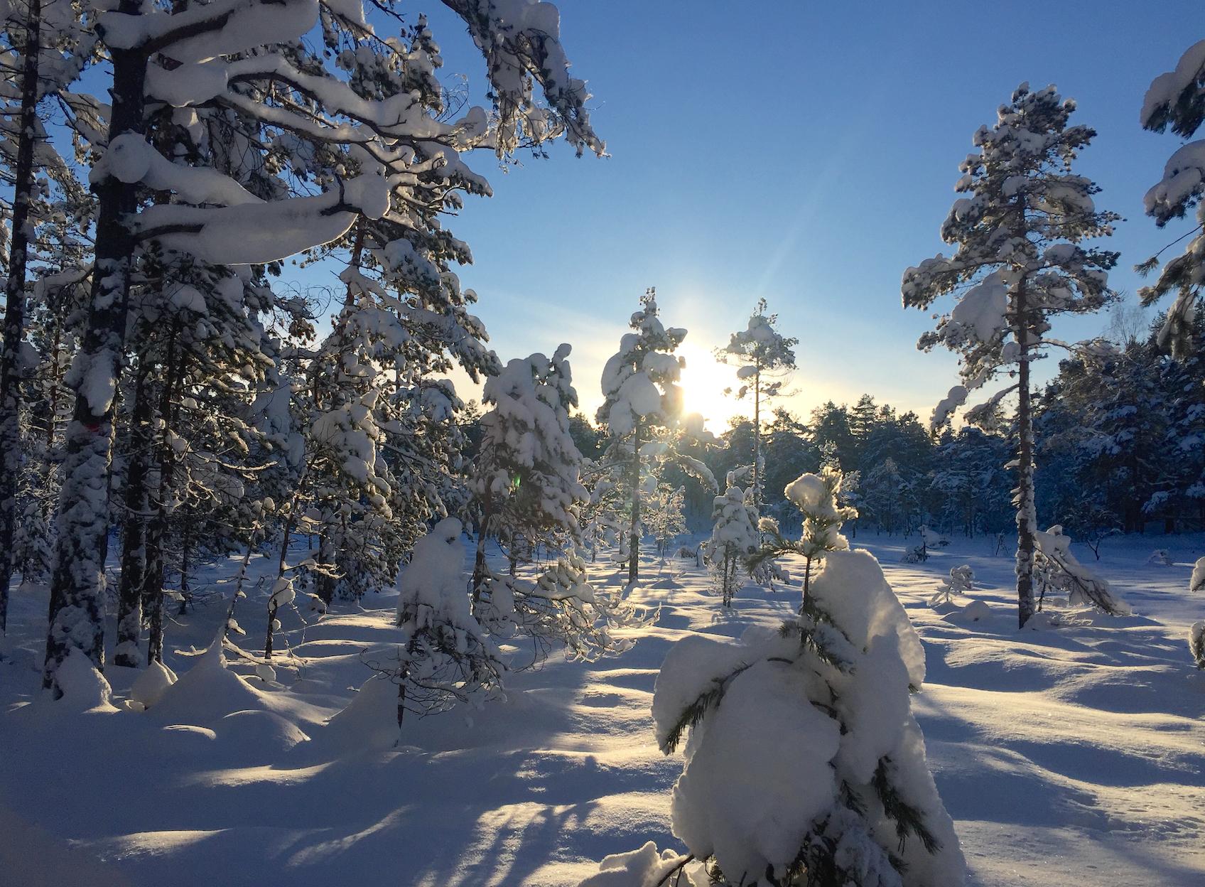 Kjekstadmarka januar 2016.