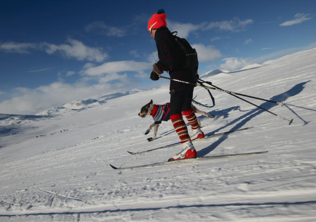 VAKRE NORGE: Fantastiske forhold, med passe kupert terreng og Jotunheimen i bakgrunnen.Foto: Ørjan K. Hansen.