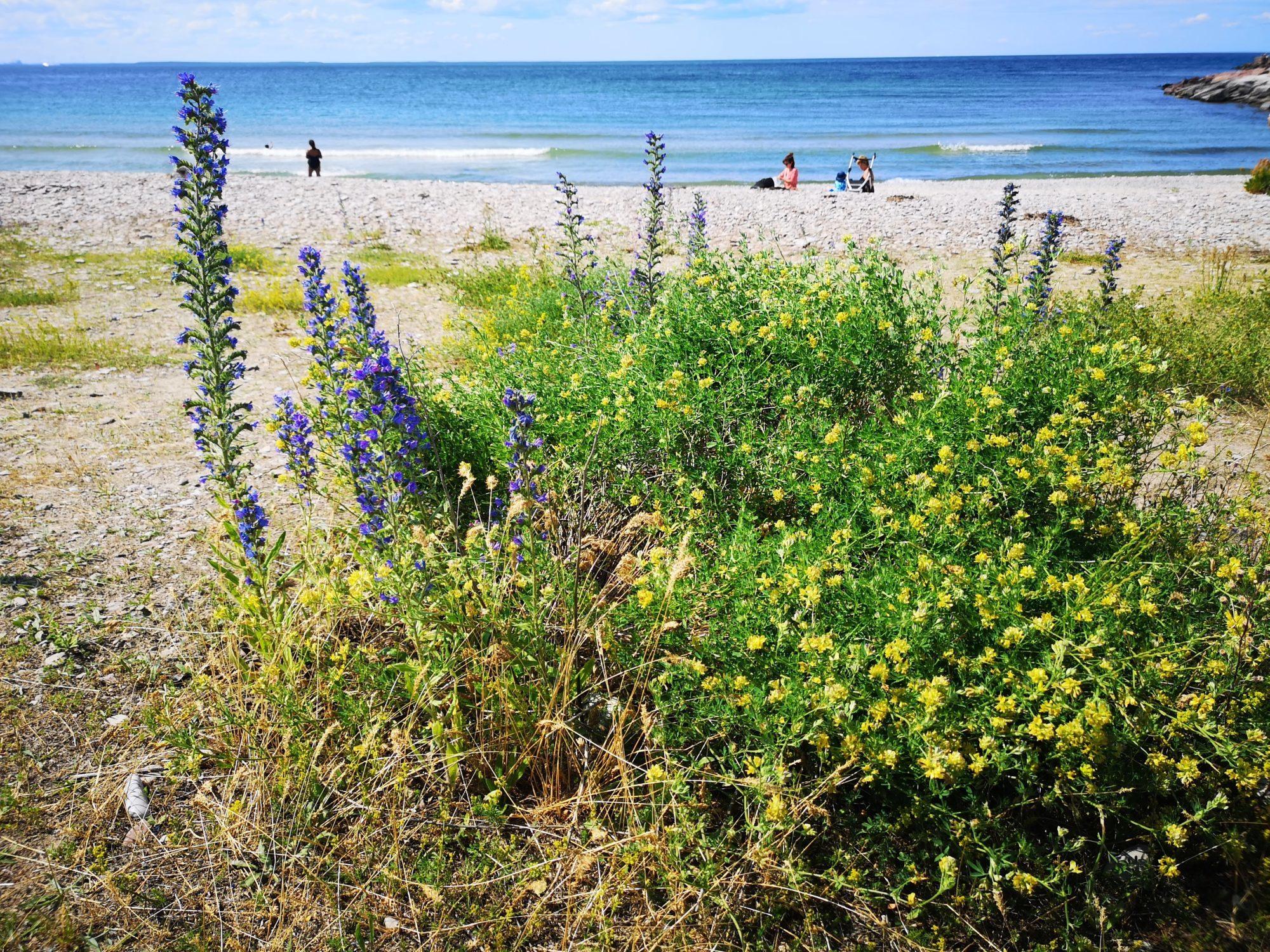 Antall soltimer er én grunn til å besøke Öland:  Her er åtte andre gode grunner